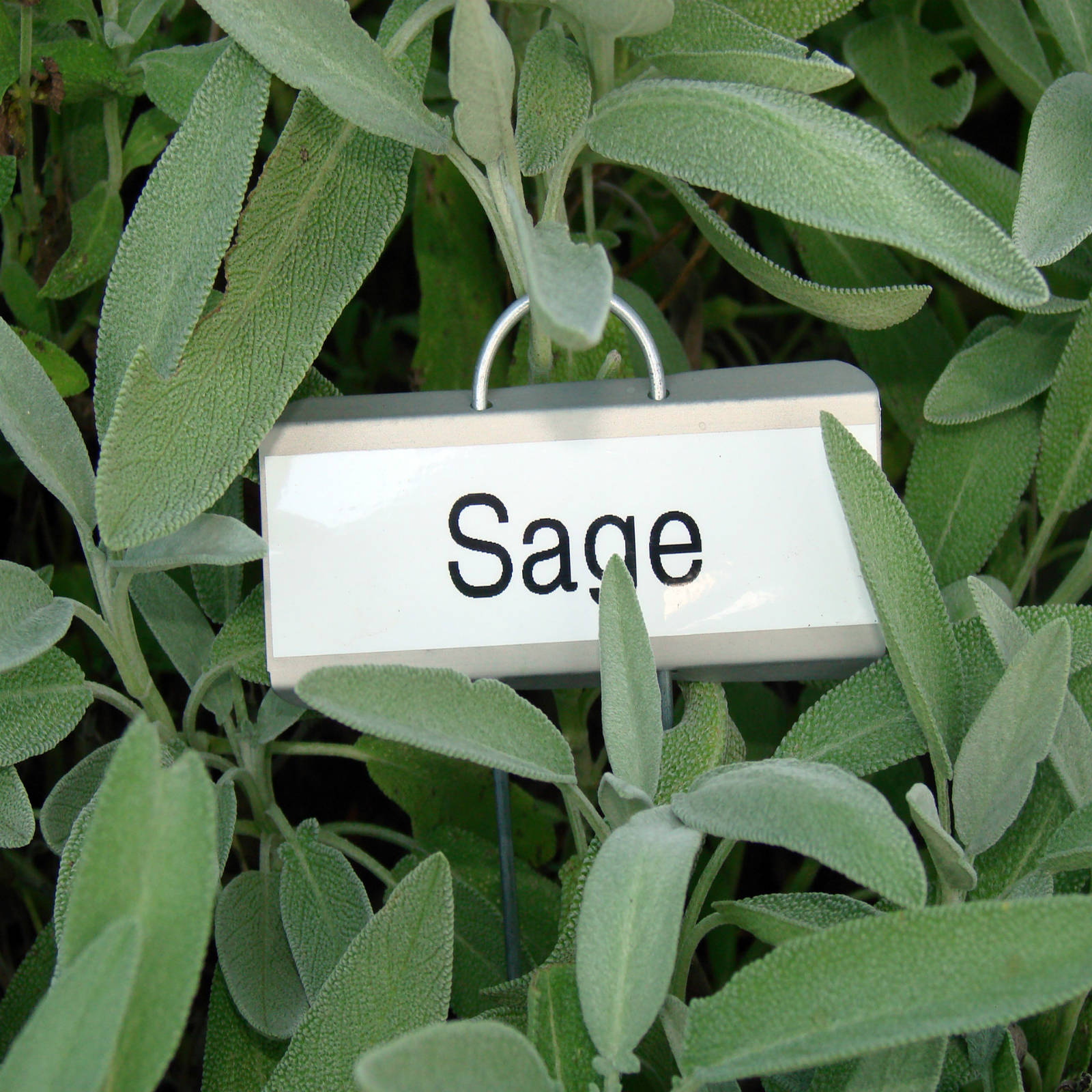 Burn Sage to Repel Mosquitoes
